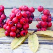 Ashberries on the vintage bench — Stock Photo #63286937