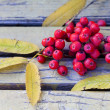 Ashberries on the vintage bench — Stock Photo #63286943
