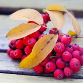 Ashberries on the vintage bench — Stock Photo