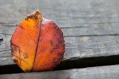 Autumn leaf in the sunlight — Stock Photo