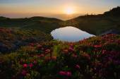 High altitude mountain lake at dawn, in idyllic uncontaminated environment with blooming rhododendrons in the foreground. — Stock Photo