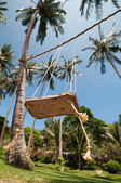 Palm swing. Tropical bounty. Tropical paradise. — Stock Photo