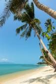 Uninhabited beach lined with palm trees in Thailand — Stock Photo
