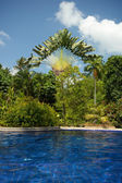 Alluring swimming pool next to lush and verdant trees and vegetation — Stock Photo