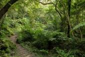 Path in a lush and verdant forest — Stock Photo