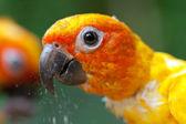 Papagei, Essen — Stockfoto