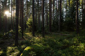 Sunshine in a lush and verdant forest — Stock Photo