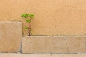 Plant grows between a tile and wall — Стоковое фото