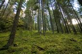 Green and verdant forest at the Repovesi national park — Stock Photo