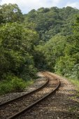 Curved railway tracks in a forest — Stockfoto