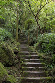 Stone stairs in a lush and verdant forest — Stock Photo