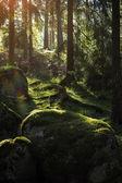 Güneşli bir gün ormanda — Stok fotoğraf