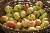 Basket full of apples — Stock Photo