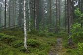 Rainy day at Finnish countryside — Stock Photo