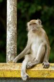 Monkey sitting at a rail — Stock Photo