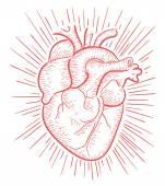 Human heart hand drawn — Stock Vector