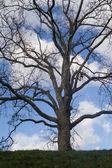 Tree against sky — Stock Photo