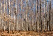 Lasy bukowe drzewa jesienią — Zdjęcie stockowe