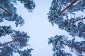 árvores de inverno — Fotografia Stock