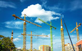 Many Cranes — Stock Photo