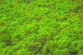 Фон листьев — Стоковое фото