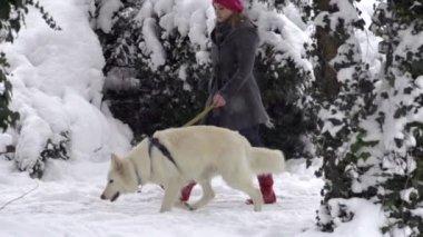 Dog Walking Through Park — Vídeo stock