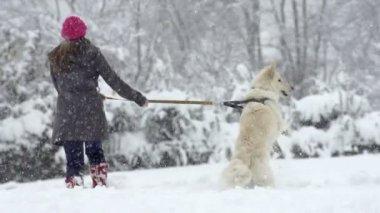 Shepherd Dog Barking And Jumping — Stock video