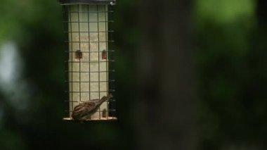 Birds eat from a bird feeder — Stock Video