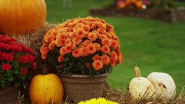 Exterior tilt up pan of fall decorations — Stock Video