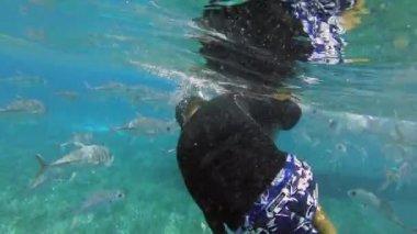A snorkeler grabs hold nurse shark — Stock Video