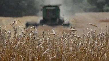 Een groene tractor oogsten een tarweveld — Stockvideo