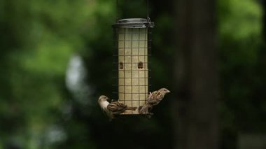 Birds eat from bird feeder — Stock Video