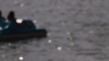 Paddle boating on a lake — Stock Video