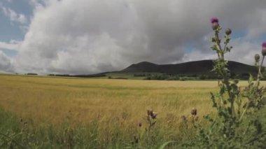 Scotland hillside and green highlands — Stock Video