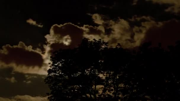 A moon lights a tree at night — Vídeo de stock