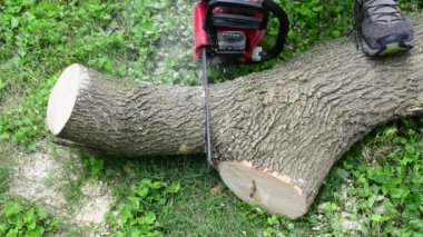 A dull chainsaw cutting a log — Stock Video