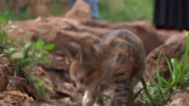 Low angle shot of a stray kitten — Stock Video