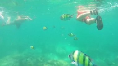 Colourful fish in ocean — Stock Video