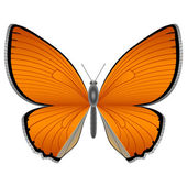 Papillon orange — Vecteur