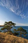 Pines coast. — Stock Photo