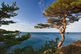 Pines costa-2. — Foto Stock