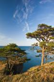 Pines coast-3. — Stock Photo