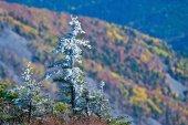 Metamorphosis of the fall. — Foto de Stock