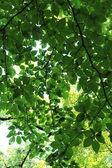 Sol filtrando folhagem — Fotografia Stock