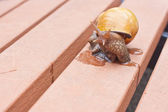 Snail with mucus on a bench in a garden — Stock Photo