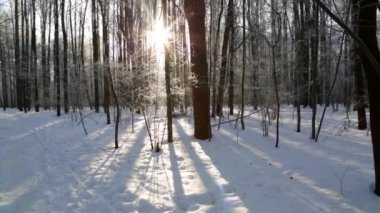 Winter forest, lit by the sun — Stock Video