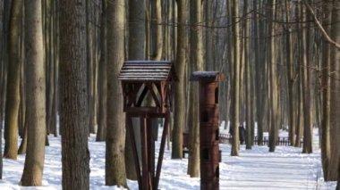 зимний лес, освещенный солнцем, в спокойную погоду, синица, едящая от кормушки — Стоковое видео
