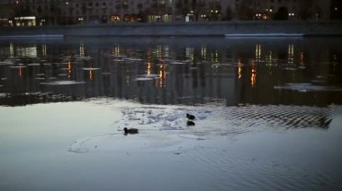 Ducks on an ice floe in the city — Stock Video