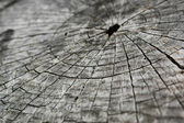 The close-up of the growth rings on the sawn tree — Stock Photo