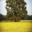 Paddy field with tree. Color image — Stock Photo #64412025